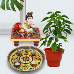 Traditional Puja Gift with Holy Tulsi Plant for Devoted Mom to Alwar