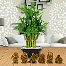 Exquisite 2 Tier Bamboo Plant with Set of Laughing Buddha to Anjar
