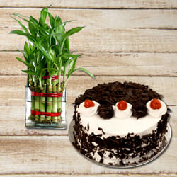 Attractive Birthday Present of Black Forest Cake with 2 Tier Lucky Bamboo Plant to Alapuzha